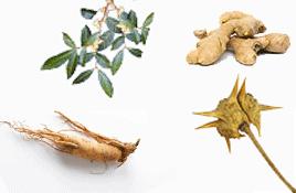 Plantes bois bandé