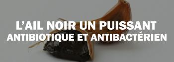 L'ail noir est un puissant antibiotique naturel