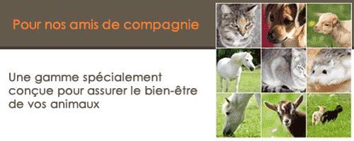 phytothérapie chien, phytothérapie chat